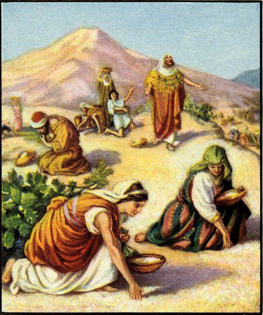 Workers For Jesus Online Bible Study--Exodus 16:1-36 Manna
